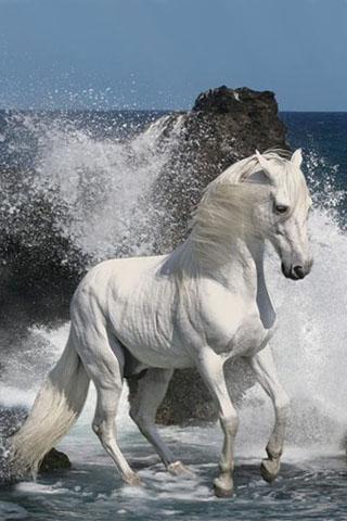 фото лошадей на заставку телефона № 20693 загрузить